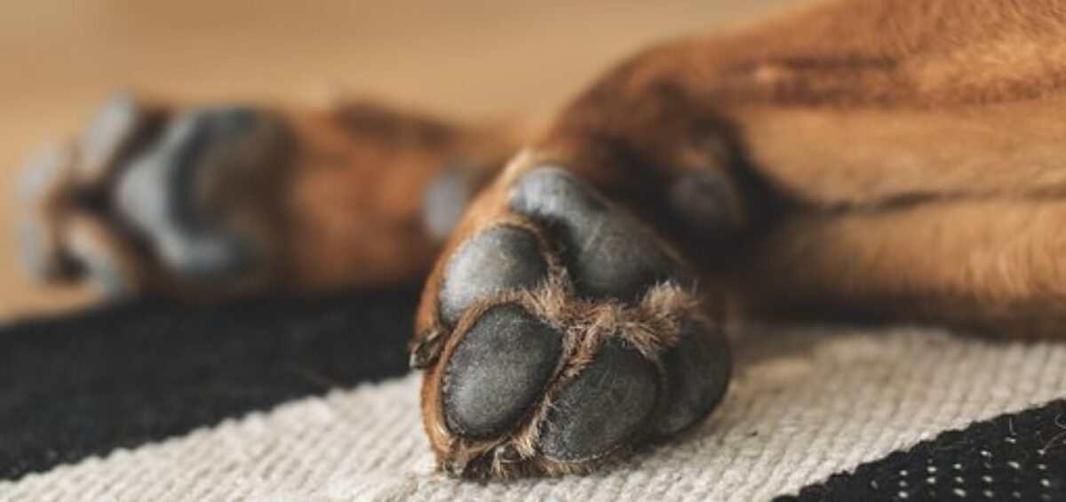 paws-1636271__340